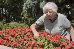 A retired woman tending to her flowers in a garden