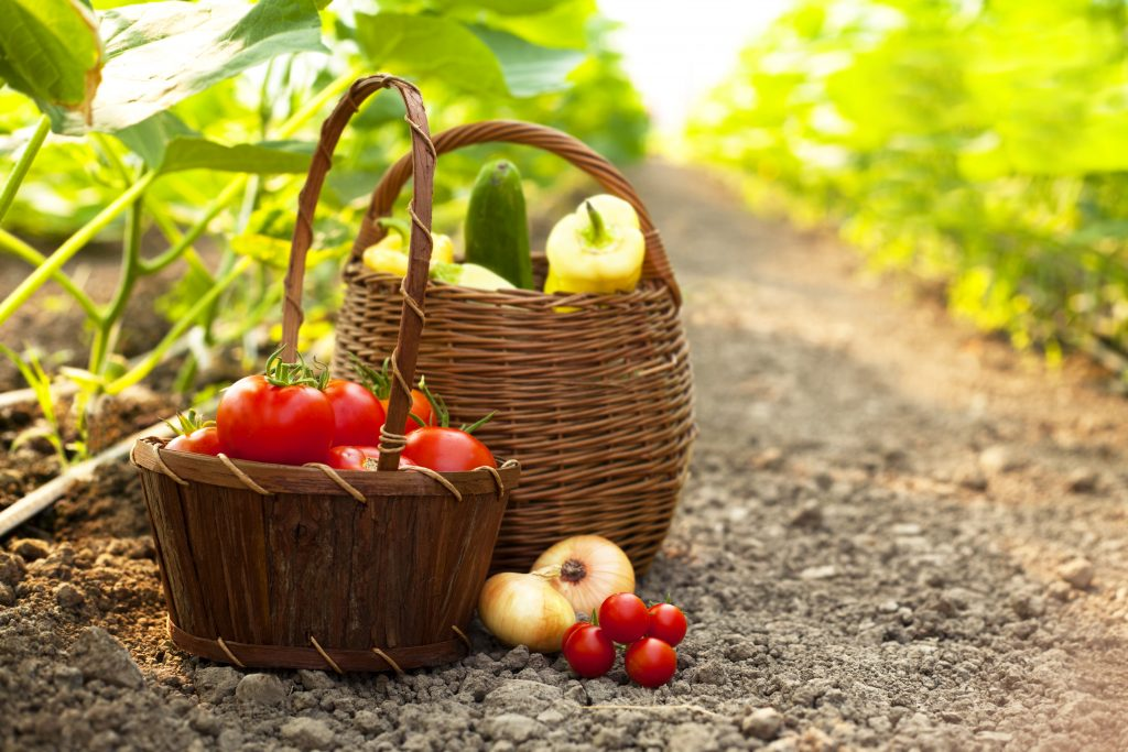 Baskets of fruits and vegetables in a plantation