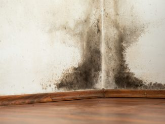 Black mold at the corner of the house