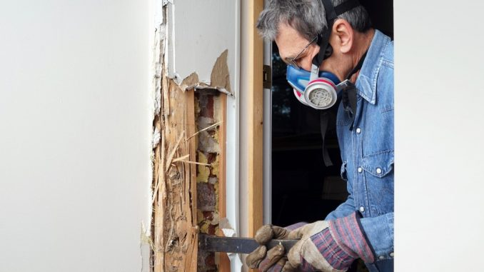 Termite Removal and Prevention