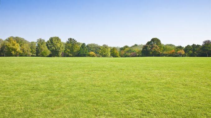 a spacious park