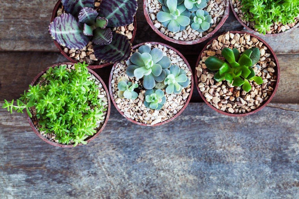 Macro photo of succulents