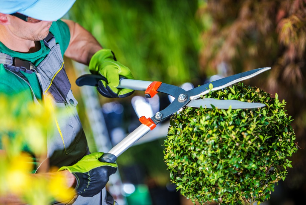Gardener trimming a plant
