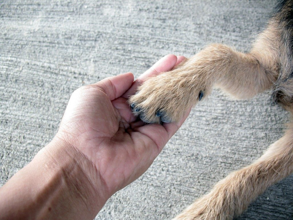 Teaching dog how to shake hands