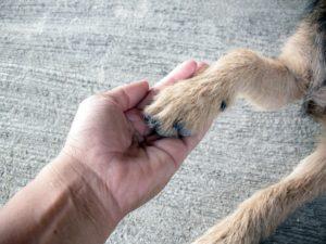 Teaching dog how to shake hands