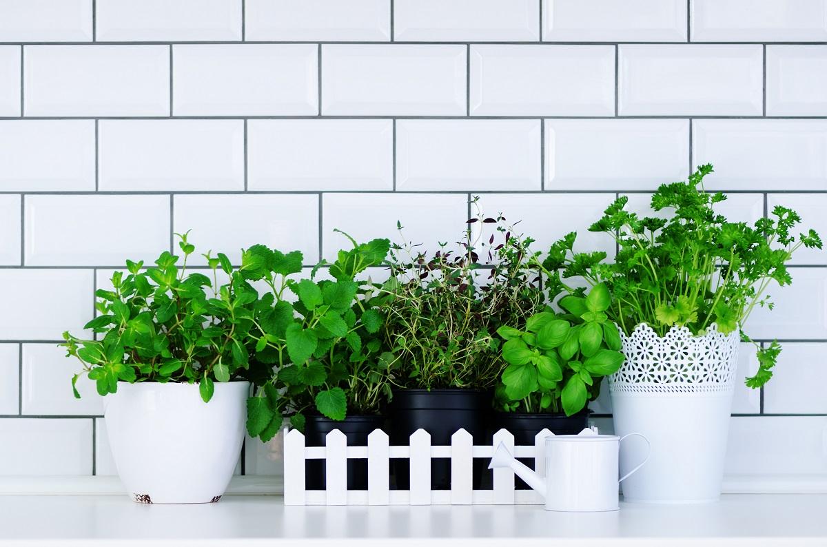 Minimalist garden room design