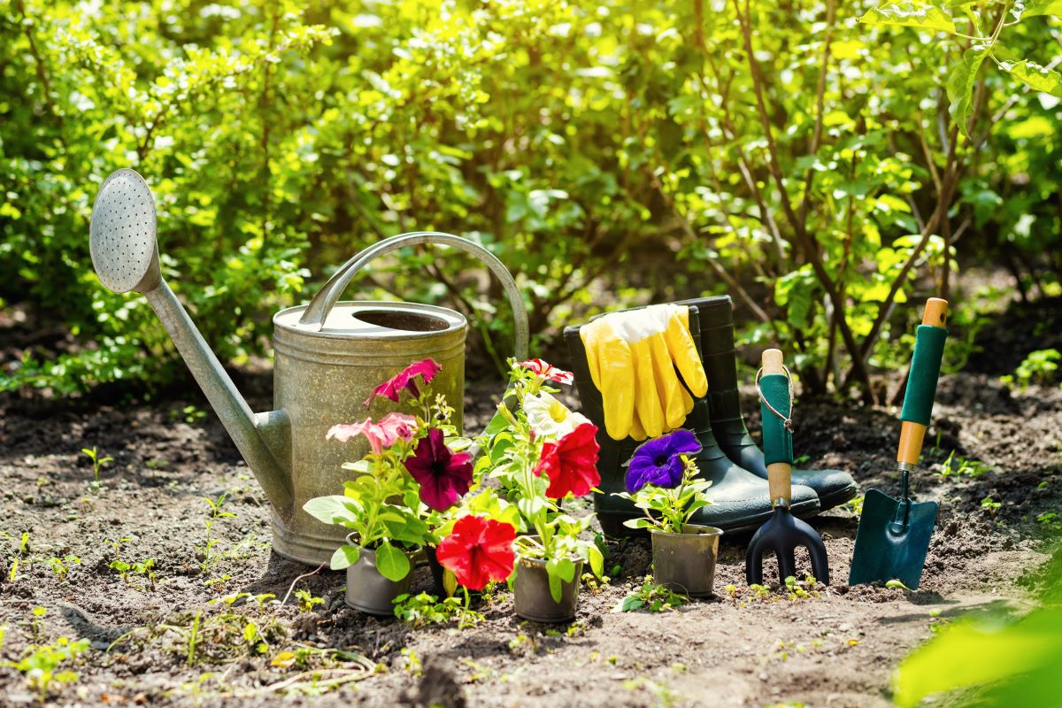 plants and gardening tools
