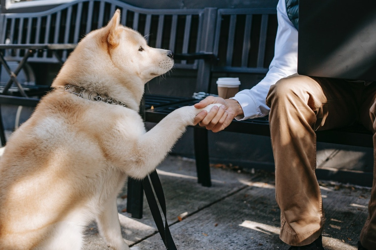 dog shaking hands with a man